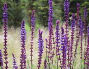 TOP PLANTS TO ATTRACT WILDLIFE TO YOUR GARDEN